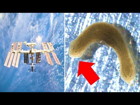 Scientists Couldn't Believe What This Worm Did While In Space